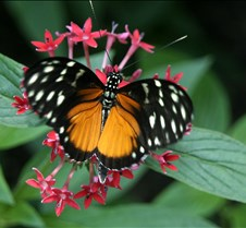 FlyPaper Best as 4 x 6s  less marked differntly Adaptive Contrast - Butterflies