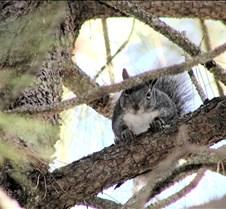 103002 Squirrel 49