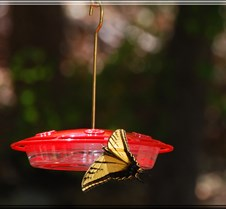 June 4, 2008 Hummingbirds