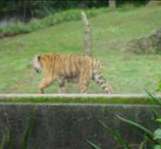 EUA e  Zoologico 076