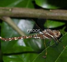 http://forestlakebugs.atspace.com/index.html http://forestlakebugs.atspace.com/index.html