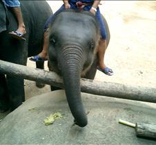 185 little elephant