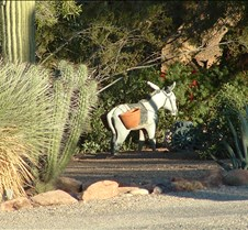 Tucson Lazy K garden burro