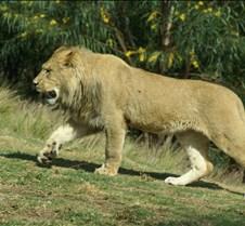Wild Animal Park 03-09 189