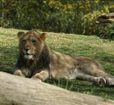 Wild Animal Park 03-09 171