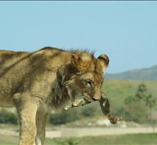Wild Animal Park 03-09 211