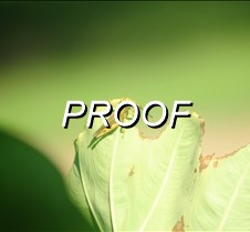 08%2F28%2F2016+Hummingbirds+Tree+Frogs