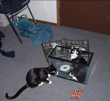 kitty picts dec 03 004