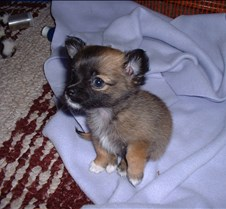 Puppy Picts 002