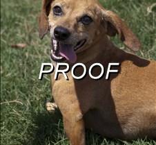 082713_POW_dog