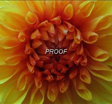 orange close-up2
