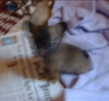 Puppy Picts 005