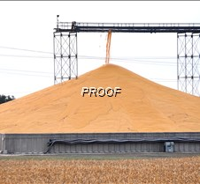 Soybean pile grows at CHS