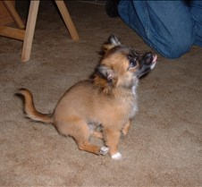 puppy picts 9-21-03 028