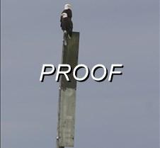 Eaglespole
