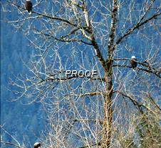 eagletree-12