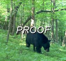 done bear