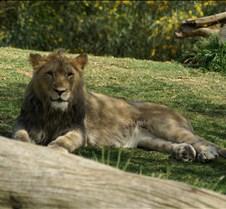 Wild Animal Park 03-09 172