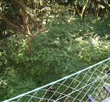 Looking down Takao Lift at treetops