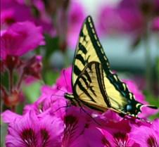 butterfly23