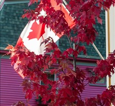 10-15-2016 Red Maple & Canadian Flag Lun 10-15-2016 Red Maple & Canadian Flag Lunenburg