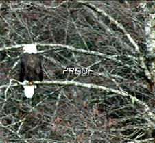 eagletree-22