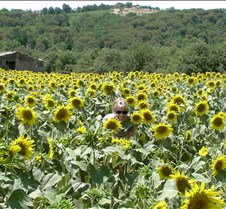 Hiding In Tuscan Sunflowers