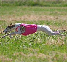 Whippets_8July_Run1_Course1_0119CCR