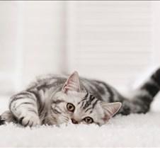 what-makes-carpet-durable1
