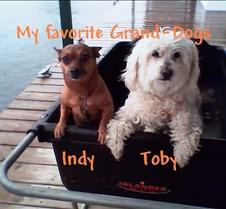 Indy et Toby