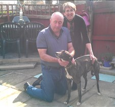 2012_03_01 - Ruby The lovely Ruby has found her niche in Pontypool with Yvonne and Paul. she is going to be one spoilt greyhound ! !