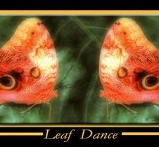 LeafDance