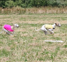 Whippets_8July_Run2_Course1_4924CR