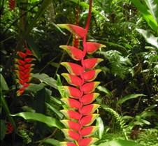 Hawaii 2010 274