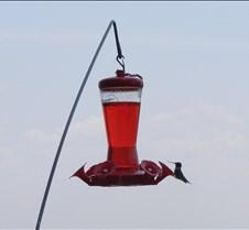 hummingbirdsitsign