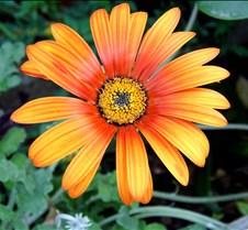 Naturaleza viva flores, paisajes etc