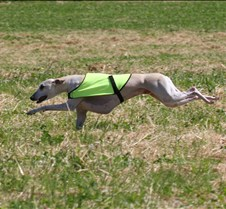 Whippets_8July_Run1_Course6_0268CR