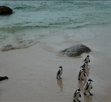 Waddle of Penguins