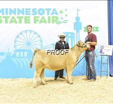Champion Prospect Heifer Clay Blair