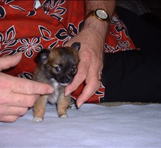 Puppy Picts 058