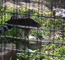 J Zoo 0611_103