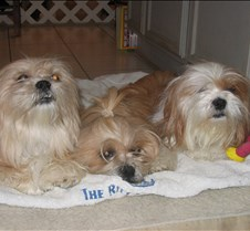 Anna's Dog Jax, Martini and Tequila