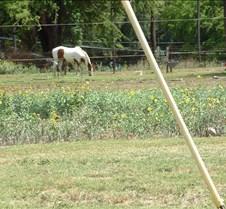 Horse farm in Waimea