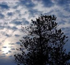 Trees Scenics Trees