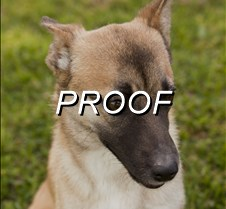 043013-POW-dog01