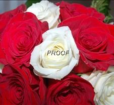 Huff Wedding 030