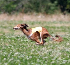 Saluki_7_July_Run1_3888CCR