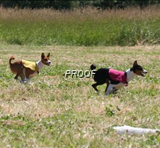 Basenjis_8Jul_Run1_Course3_3994CR2