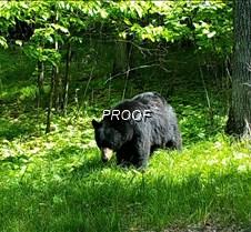 bear_0237 (2)