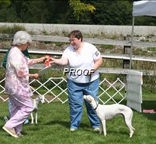 Obedience_Awards (6)